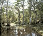 Rýchlosť datovania v Kissimmee Florida